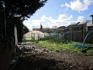 The two old polytunnels